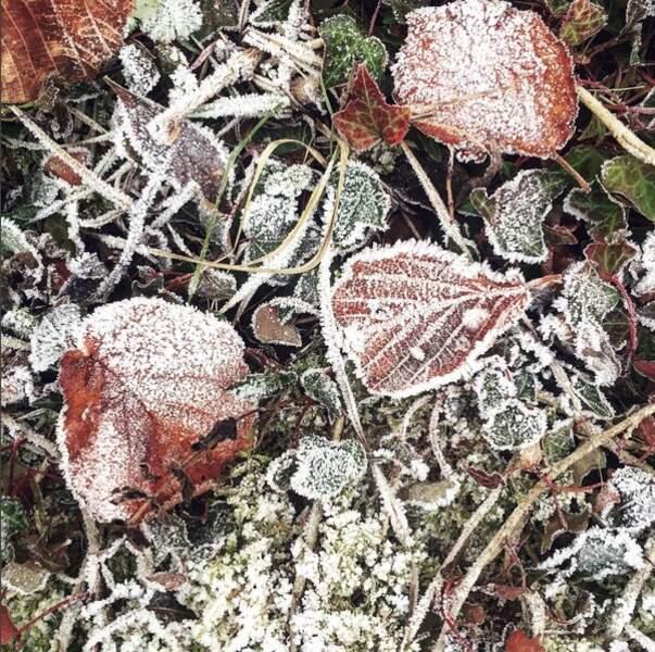 L'hiver s'installe sur le tapis des feuilles d'automne