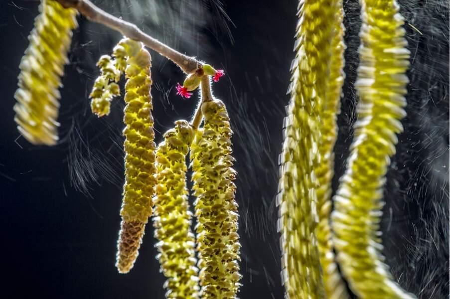 "Premier prix catégorie ""botanique"", Valter Binotto"