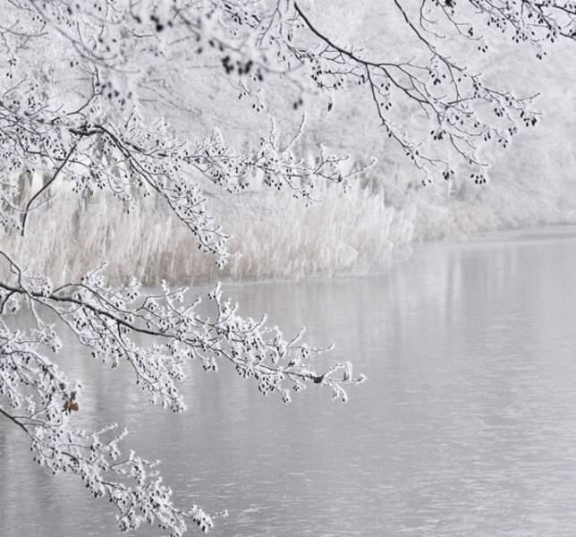 Ce n'est pas la neige mais le givre qui offre ces somptueux spectacles blancs