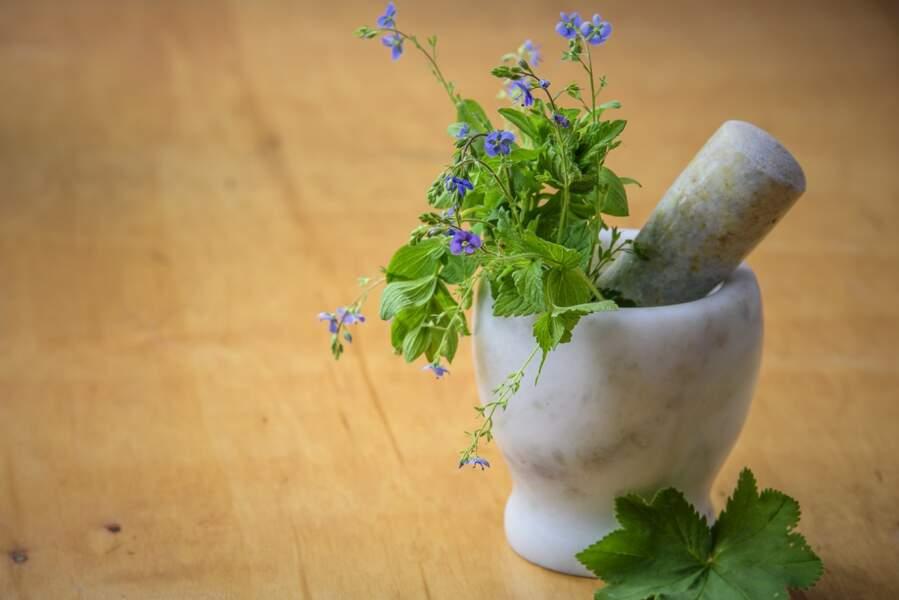 Le conseil phyto de la naturopathe : miser sur les bonnes plantes