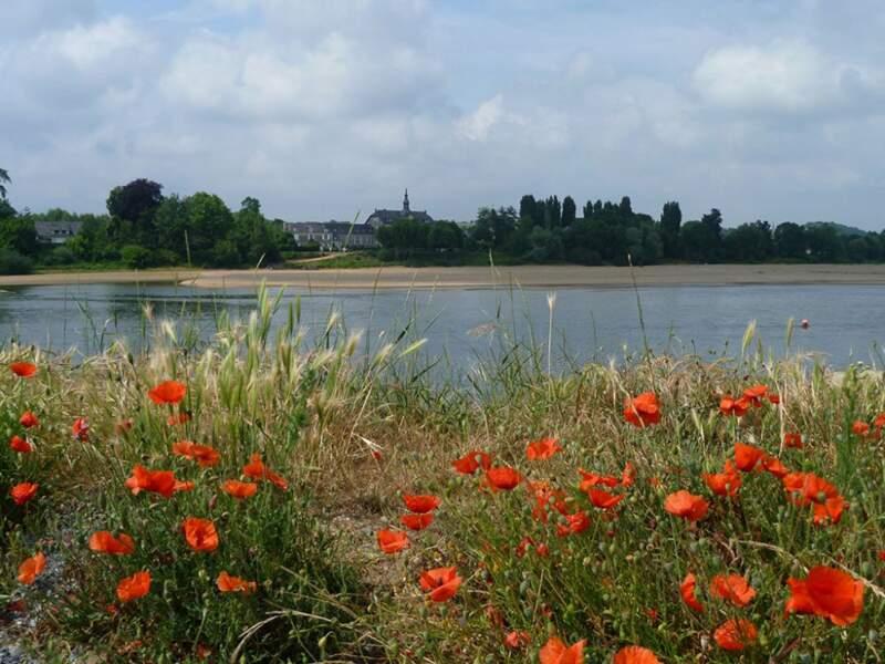 Béhuard, commune insulaire située sur la Loire et inscrite au patrimoine de l'Unesco