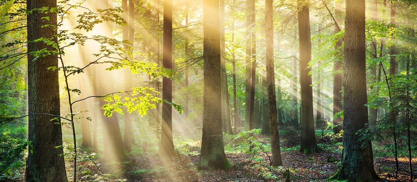 La forêt : un placement avantageux