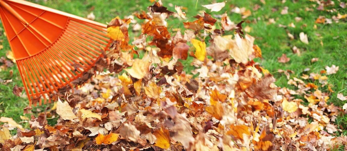 Comment recycler les feuilles mortes de son jardin ?