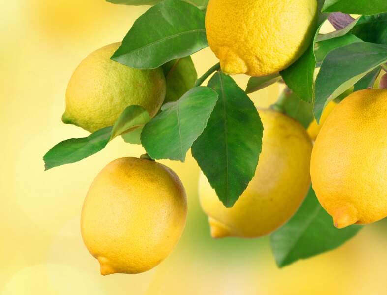 L'acide citrique : le produit ménager indispensable