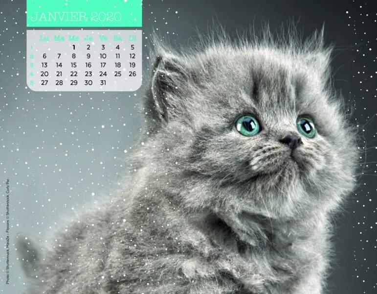 Calendrier Miaou 2020 : Janvier