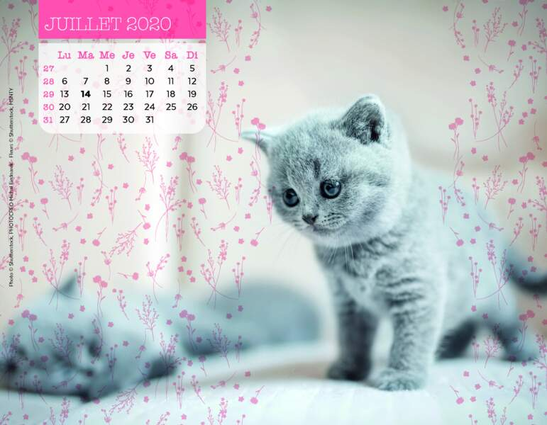 Calendrier Miaou 2020 : Juillet