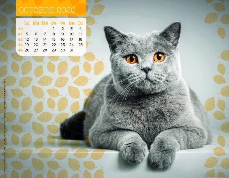 Calendrier Miaou 2020 : Octobre