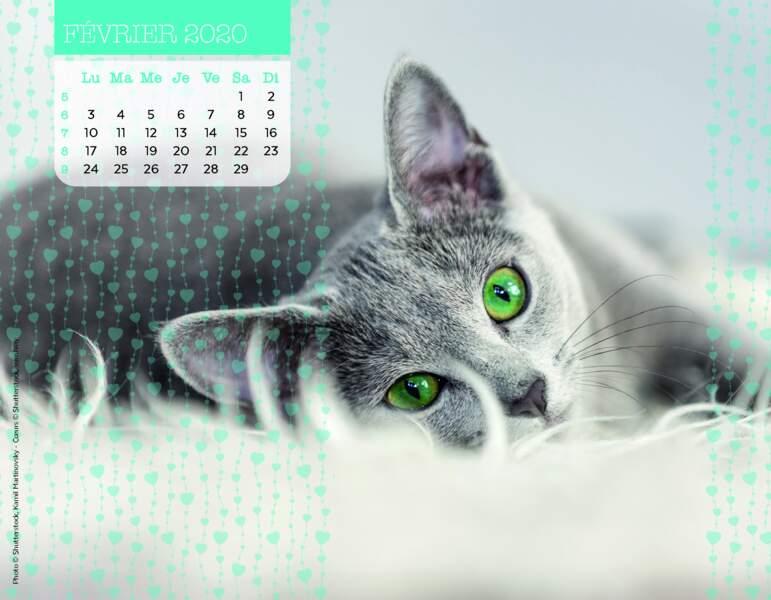 Calendrier Miaou 2020 : Février