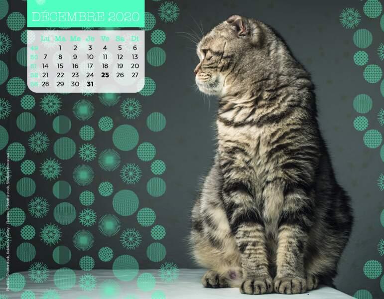 Calendrier Miaou 2020 : Décembre