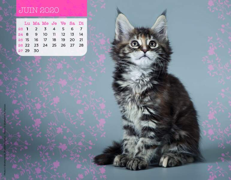 Calendrier Miaou 2020 : Juin