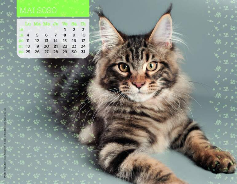 Calendrier Miaou 2020 : Mai
