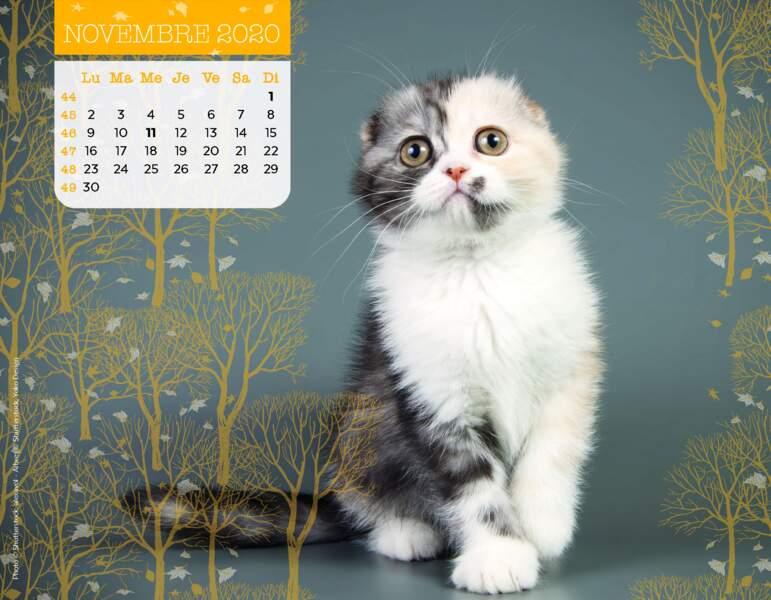 Calendrier Miaou 2020 : Novembre