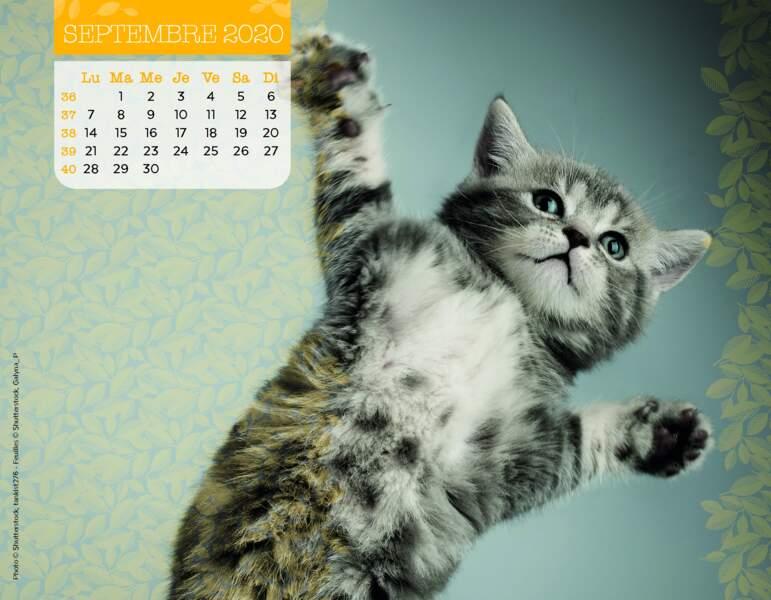 Calendrier Miaou 2020 : Septembre