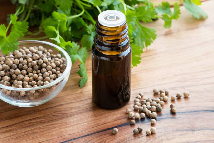L'huile essentielle de Coriandre