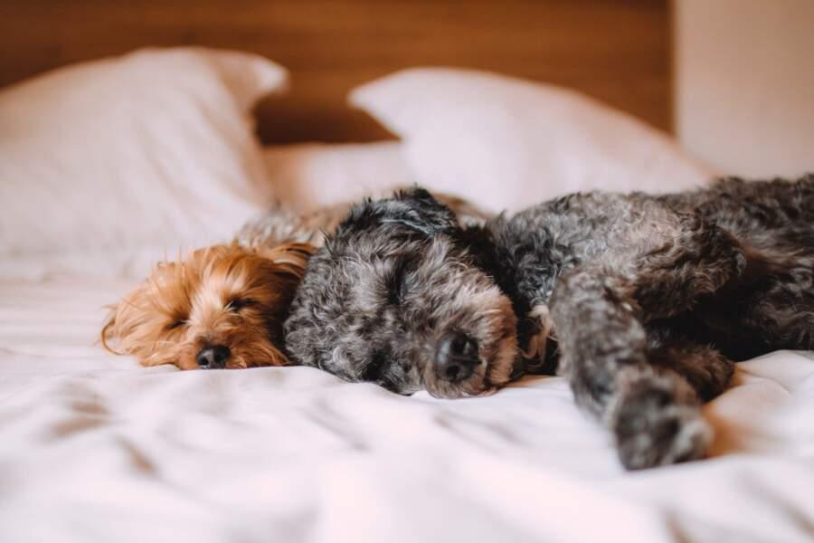 Un propriétaire peut-il interdire à un locataire d'avoir des animaux de compagnie ?