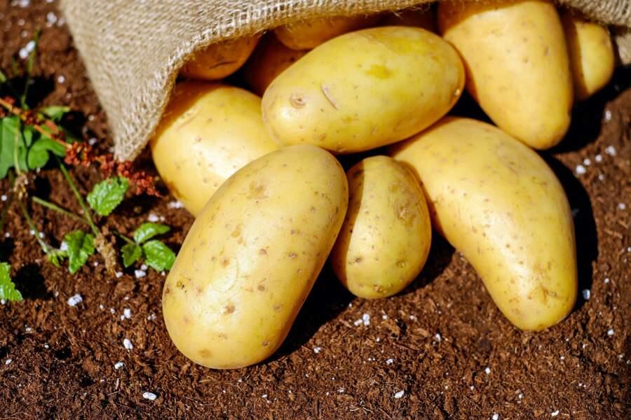 Gaspillage : 4 astuces pour ne plus jeter de pommes de terre