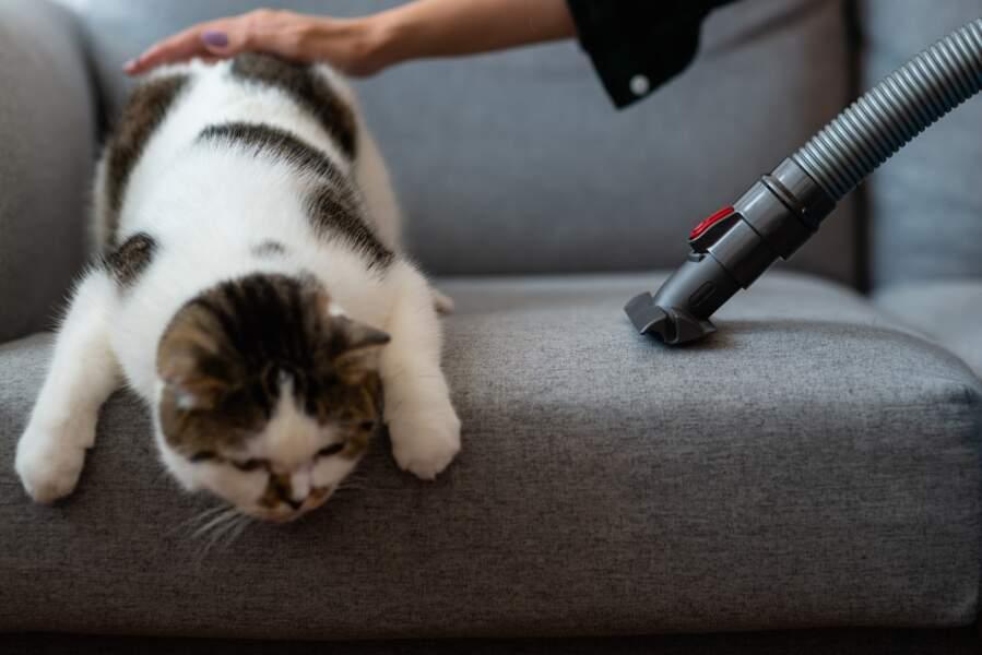 Quelle (bonne) routine ménage adopter quand on a des animaux ?