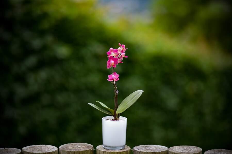5 objets de la maison à recycler en pots de fleurs