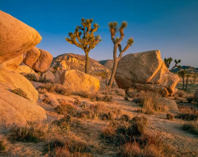 Le Parc national de Joshua Tree en Californie du Sud