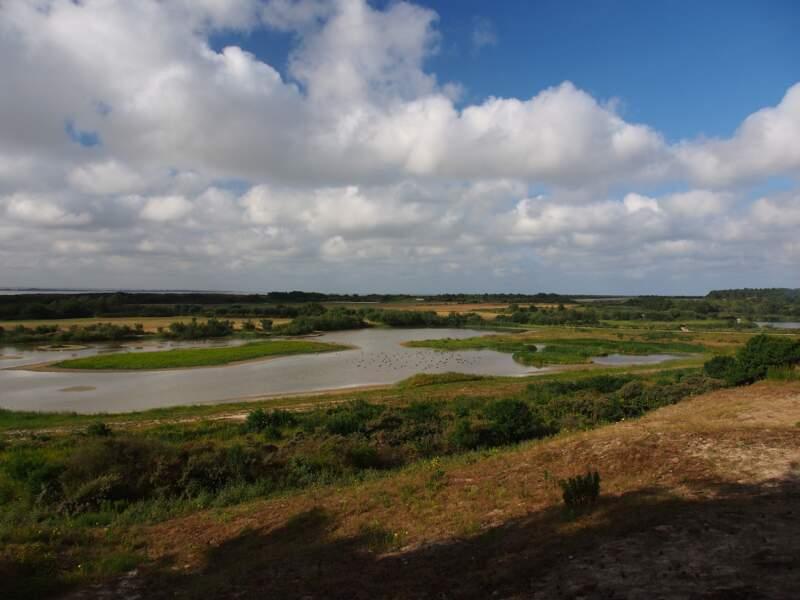 Le Marquenterre : 3 000 hectares de réserve naturelle