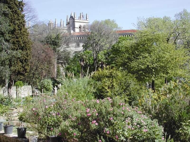 Le Jardin des plantes jouxte la faculté de médecine