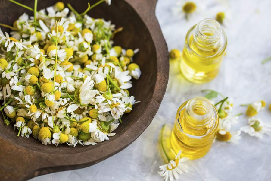 L'huile essentielle de camomille matricaire