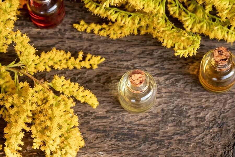 L'huile essentielle de verge d'or