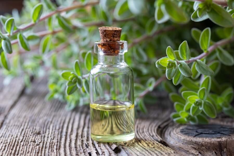L'huile essentielle de Ravintsara et de Marjolaine à coquilles