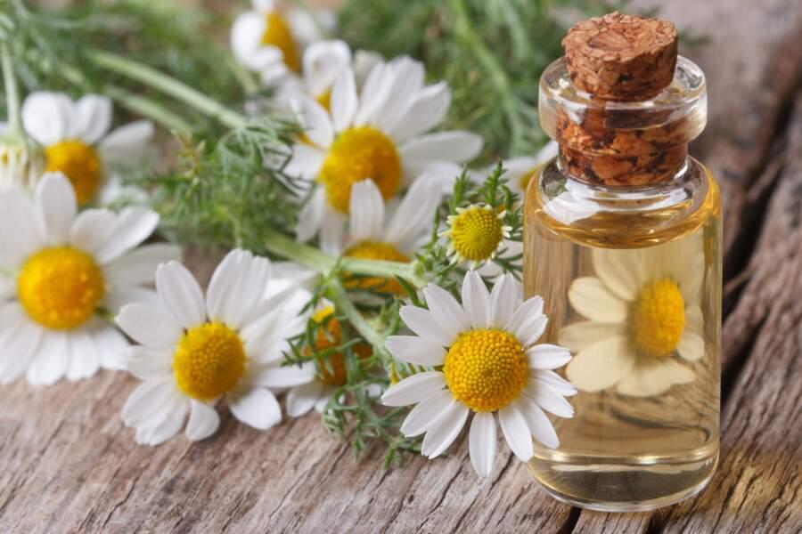 L'huile essentielle de Camomille romaine