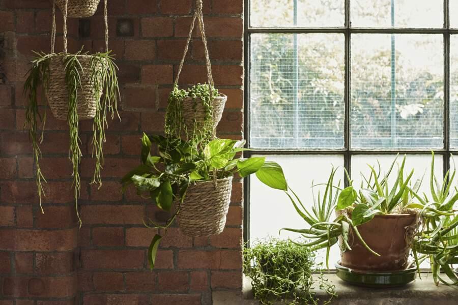 Plantes suspendues - Primark