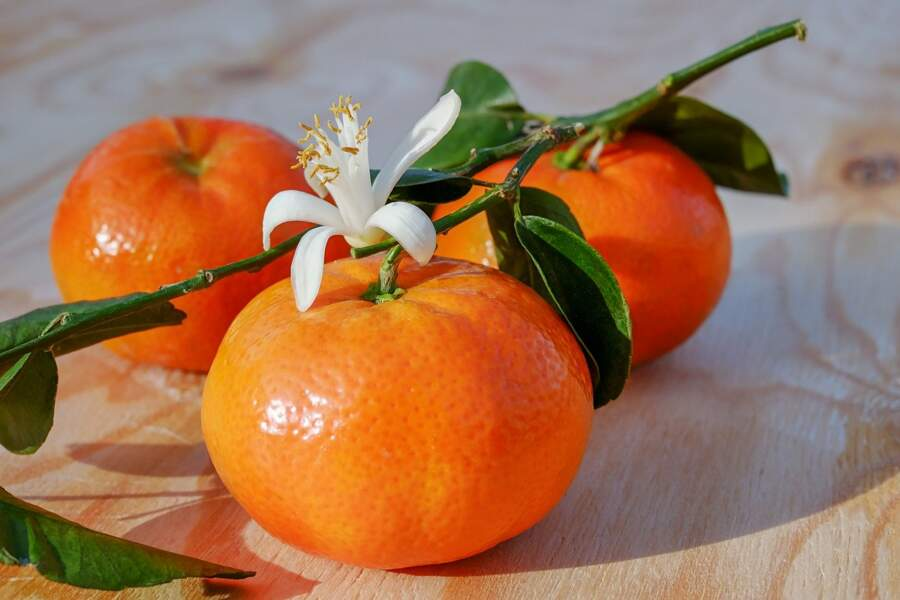 Les clémentines et mandarines