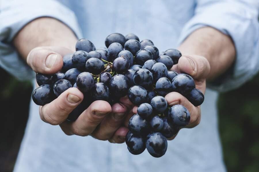 Nos conseils pour bien choisir, préparer, conserver et déguster le raisin de table